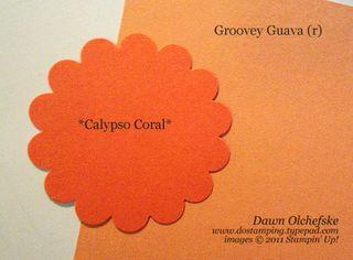 Calypso-and-Guava