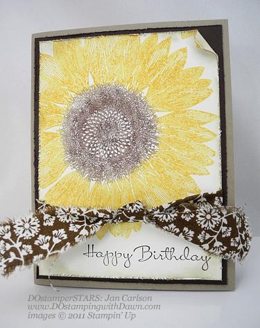 Sunflower-JC