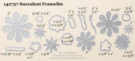 Stampin' Up! Succulent Framelits Dies sizes shared by Dawn Olchefske #dostamping