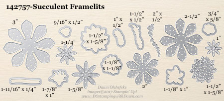 Stampin' Up! Succulent Framelits Dies sizes shared by Dawn Olchefske #dostamping