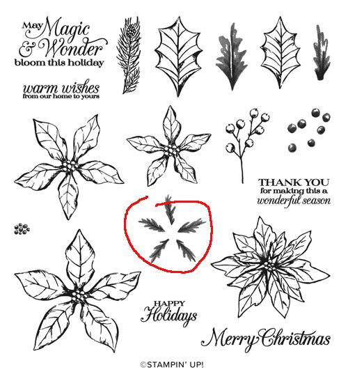153475-Poinsettia Petals