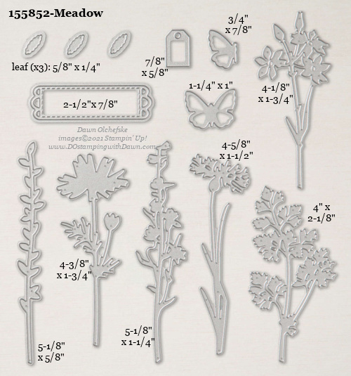 Stampin' Up! Meadow Die size shared by Dawn Olchefske #dostamping #stampinup #papercrafting #diecutting #stampindies